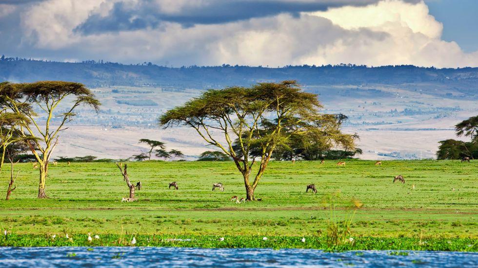 Croisières Afrique