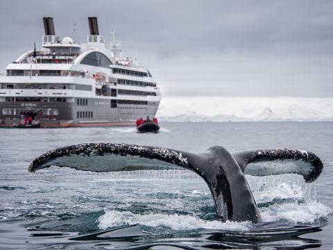 Crucero Ponante Antártico
